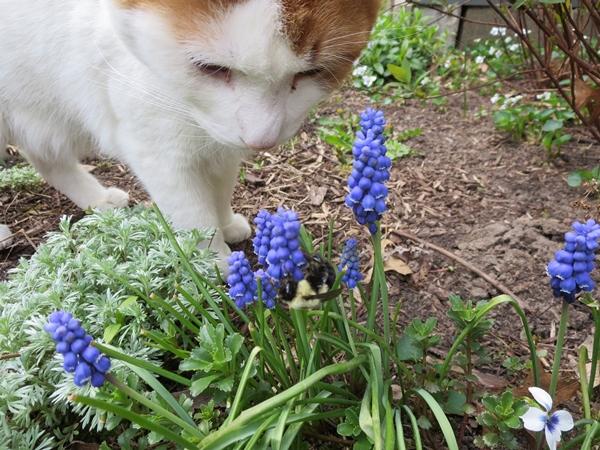 spring2_0497