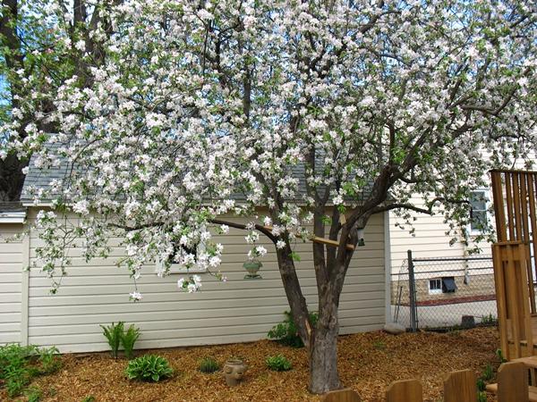 spring2_6821