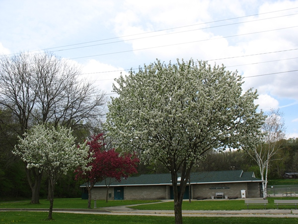 spring2_6894