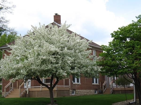 spring2_6916